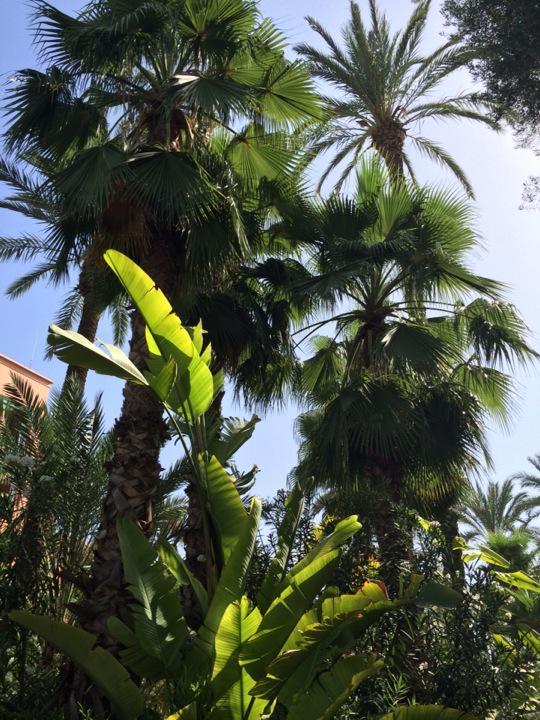 cultiver des palmiers et des esp232ces exotiques dans des