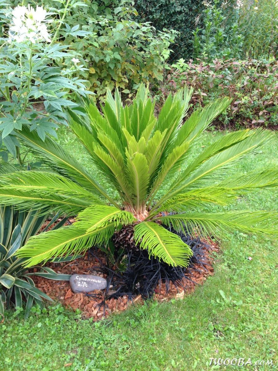 plante exotique pour l'exterieur