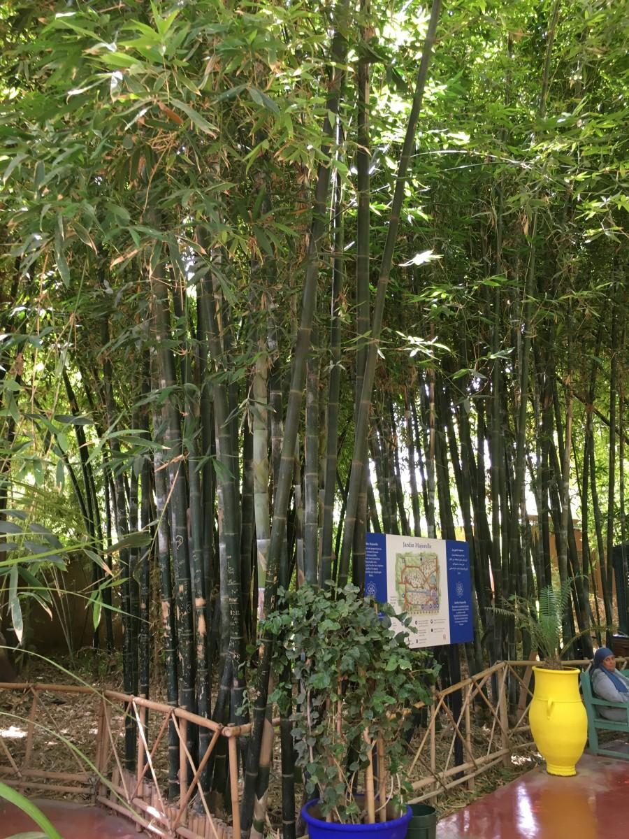 Le forum des fous de palmiers le jardin de majorelle for Jardin majorelle 2015