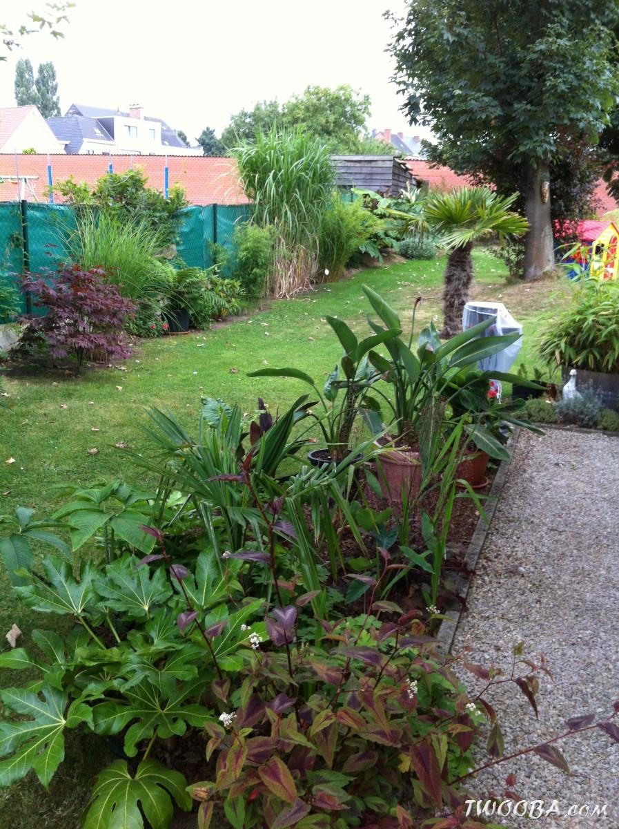jardin la palmeraie renaix b. Black Bedroom Furniture Sets. Home Design Ideas