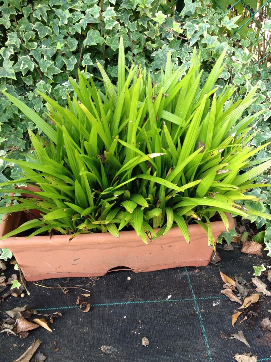 Plantules à vendre IMG_6184