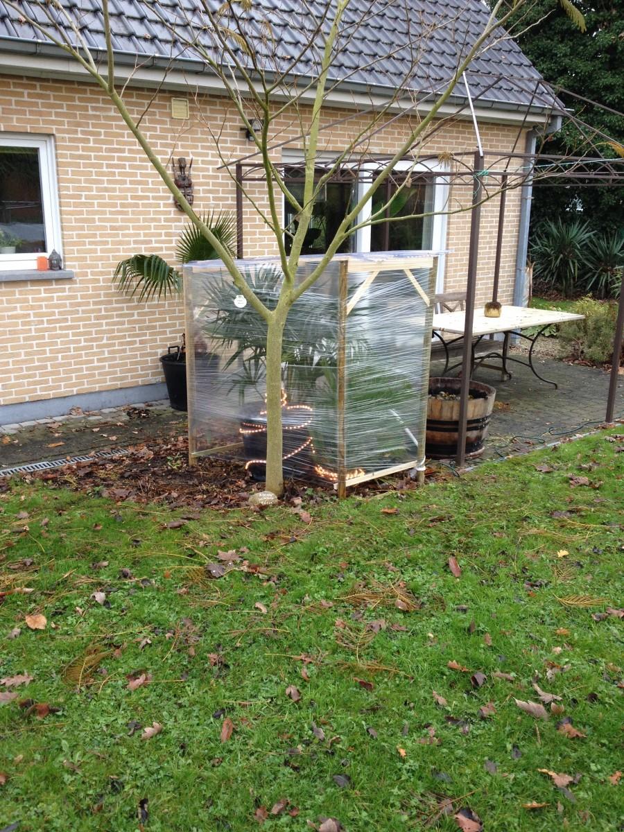 Le forum des fous de palmiers jardin d 39 armata 85 - Quand mettre du fumier dans son jardin ...