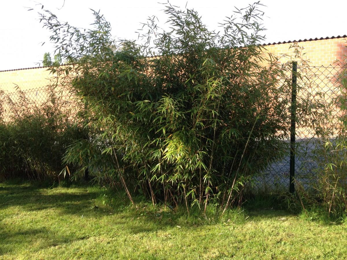 le forum des fous de palmiers � b jardin quotla palmeraie