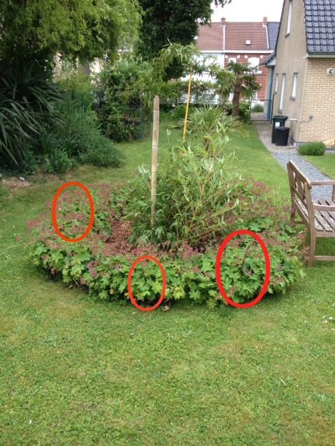 le forum des fous de palmiers conseils et aides pour planter des bambous tra ants. Black Bedroom Furniture Sets. Home Design Ideas