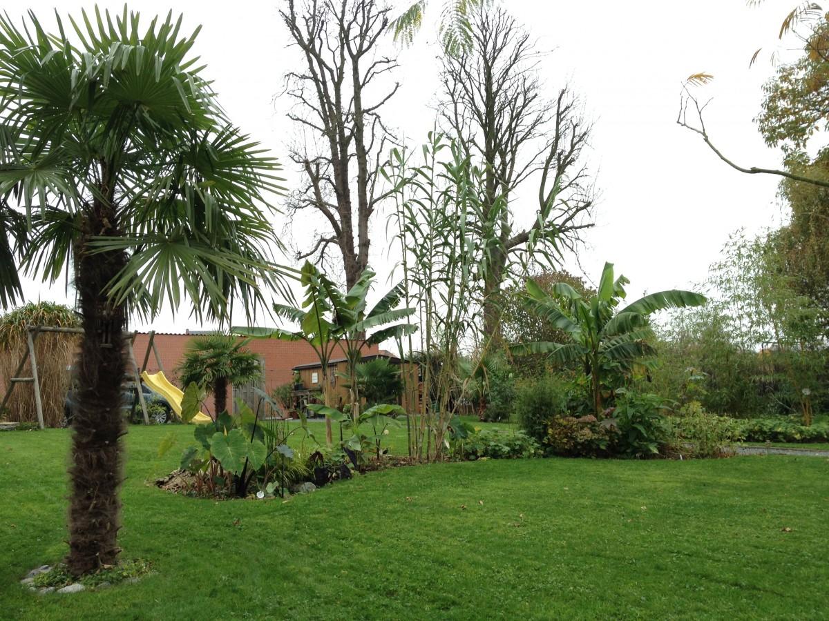 "Jardin ""La Palmeraie"" à Renaix (B) - Page 5 IMG_8094"