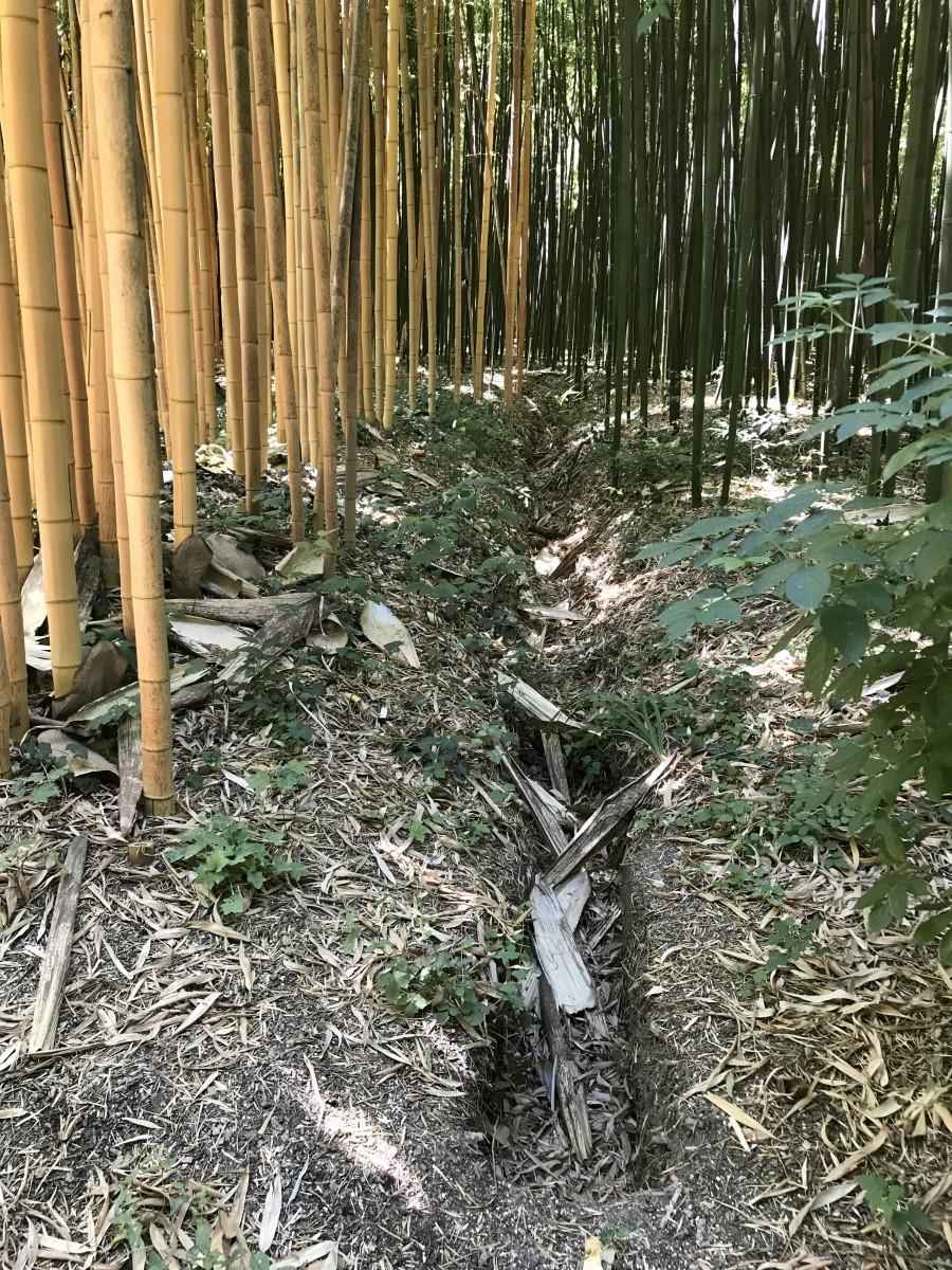 Tout Ce Qu Il Faut Savoir Sur Le Bambou La Palmeraie Fr