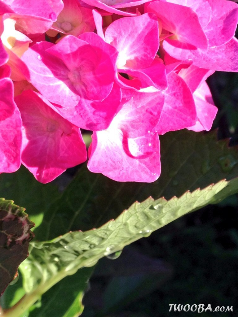 """Jardin """"La Palmeraie"""" à Renaix (B) Foto_3_1"""