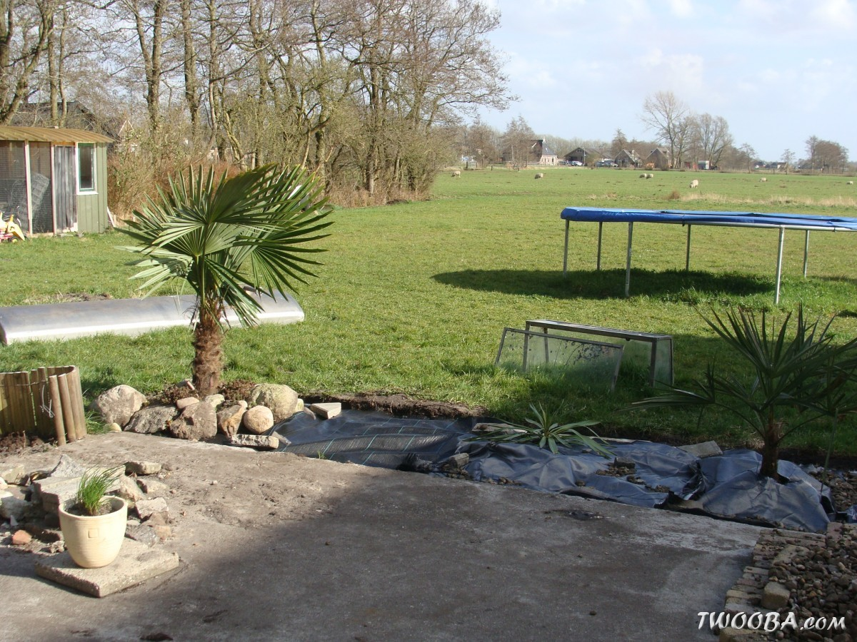 Hoe gunnera manicata aanplanten exotische bomen en struiken - Hoe amenager tuin ...